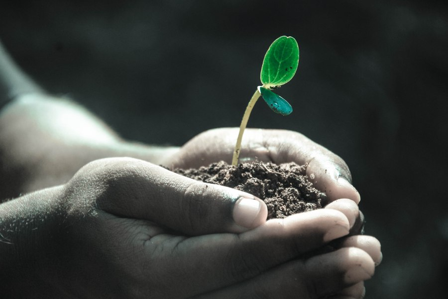 hands-plant.jpeg